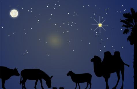 Stall Bethlehem